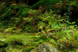 moss-on-forest-floor-11299335116y5p