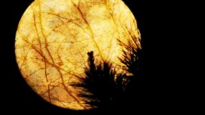 I Remember You and the Amber Moon, a poem ... and therein lies your Wednesday Writing Prompt