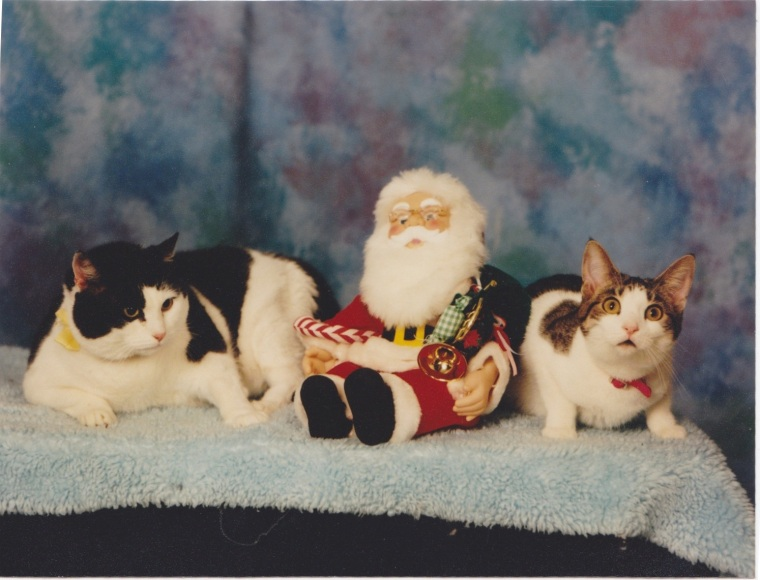 Christmas 1999: Pywacket and Gypsy Rose