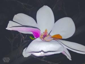 bright flower at night