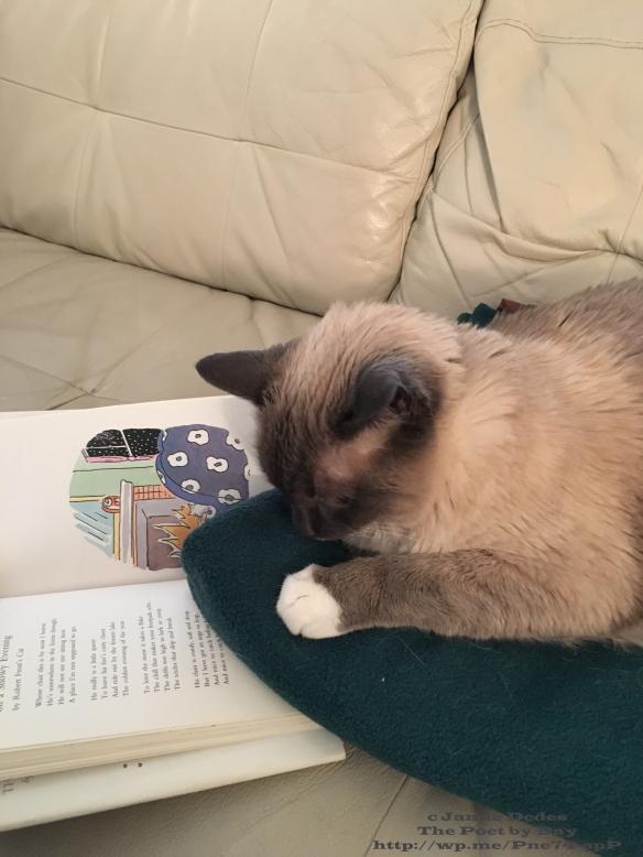In Xanadu did Kubla Kat A splendid sofa-bed decree With silken cushions soft and fat A perfect feline habitat