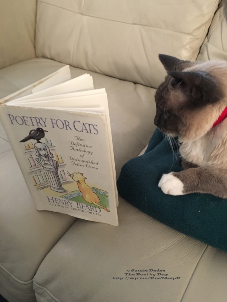 Grandkitty Dahlia reads The Efinitive Anthology of Distinguished Feline Verse
