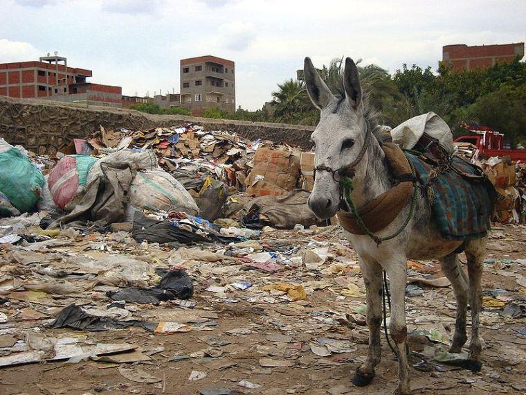 A Donkey at Mokattam Hill in Cairo